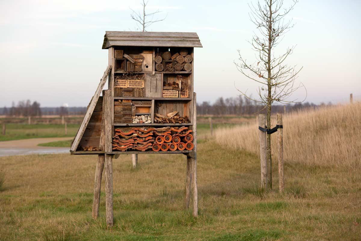 insecten-hotel-Bargerveen_7306